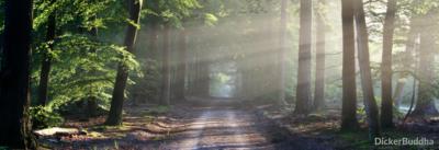 Meditationsanleitung – JETZT Meditation lernen