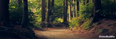Vipassana Meditation – In 10 Tagen Meditieren lernen