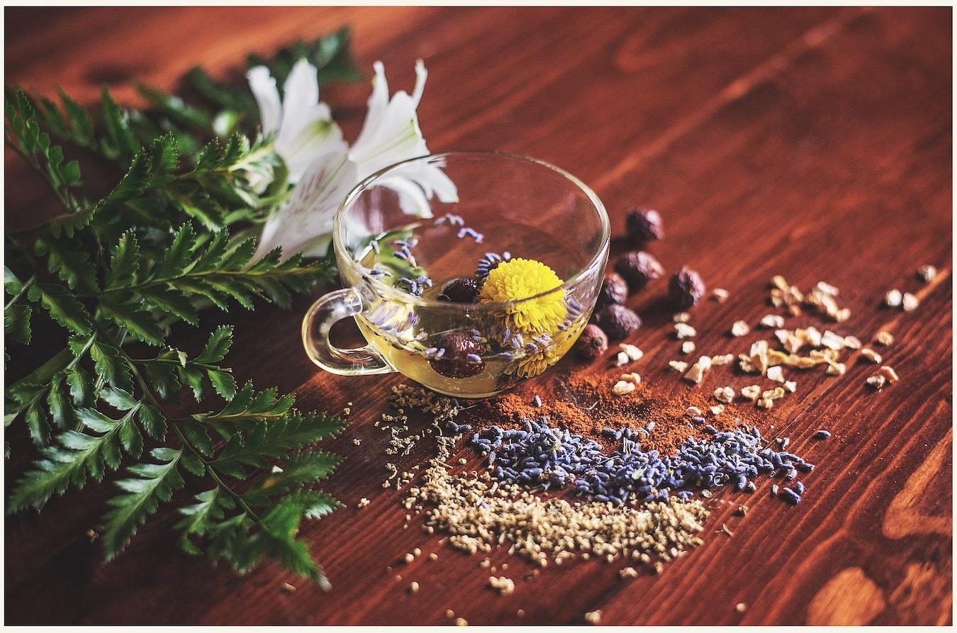 Kräuter in einer Teetasse Pflanzen aromatische Pflanzen und Blüten