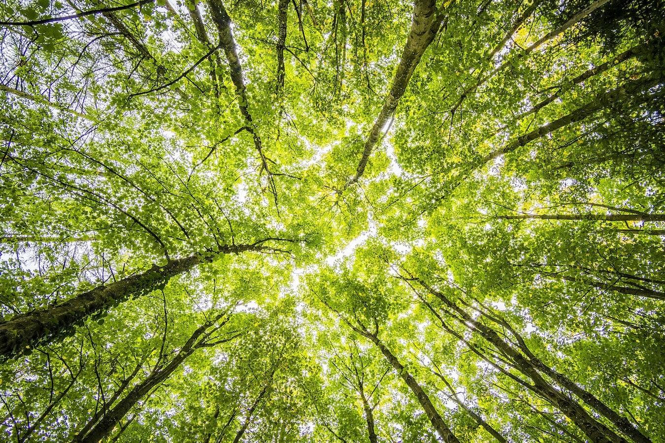 Baumkronen, Wald, Natur entspannt und macht den Kopf frei